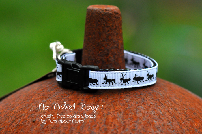 Ants cat collar FREE SHIPPING!
