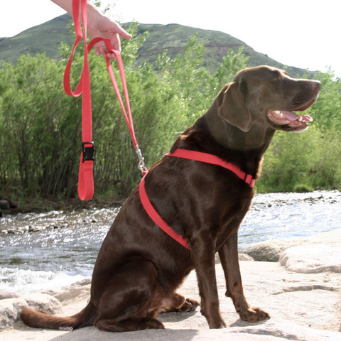 Hemp basic harness red SMALL