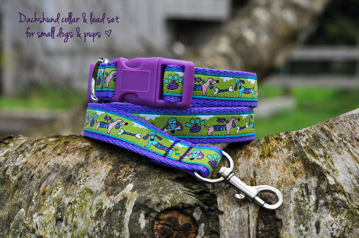Dachshund collar lime green & purple for small to med sized dogs