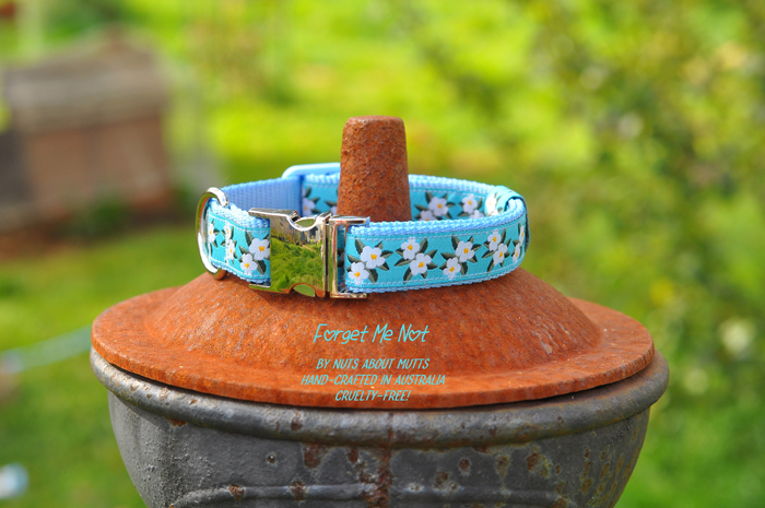 Forget-Me-Not dog collar small to medium sized dogs