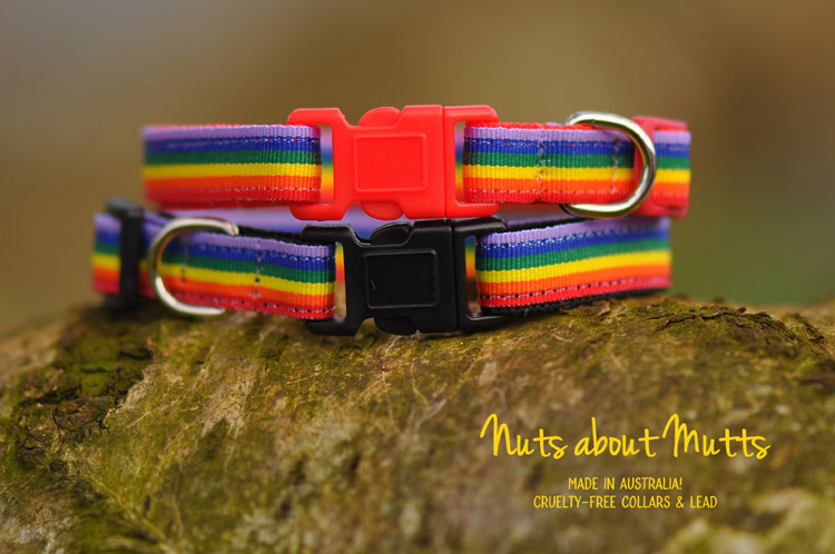 Rainbow LGBT Pride  puppy, toy dogs, small dogs