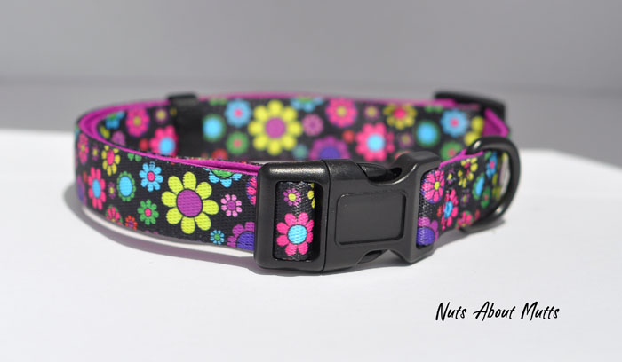 Oopsie Daisy dog collar small, medium, large