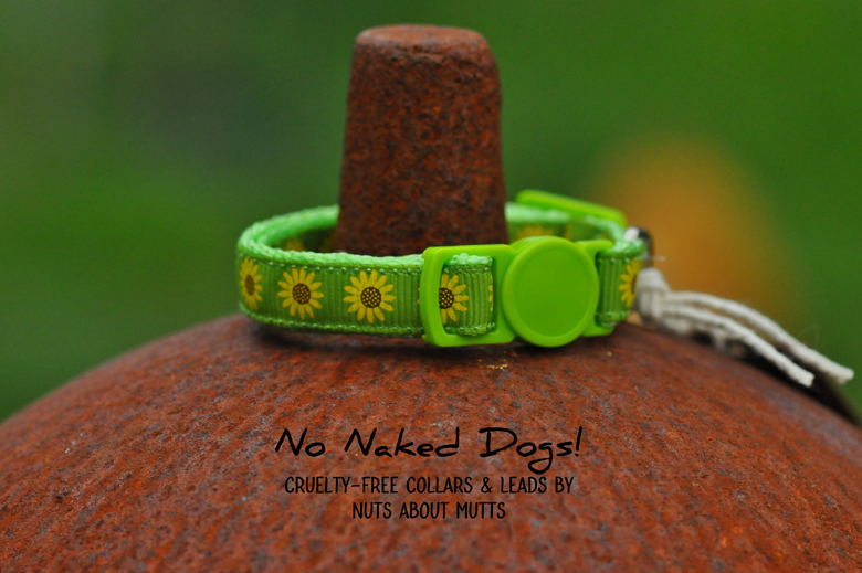 Sunflowers Lime cat collar 3 sizes FREE SHIPPING!