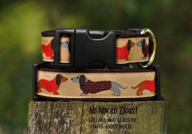 Tan Dachshund  ribbon dog collar med, large, x-large